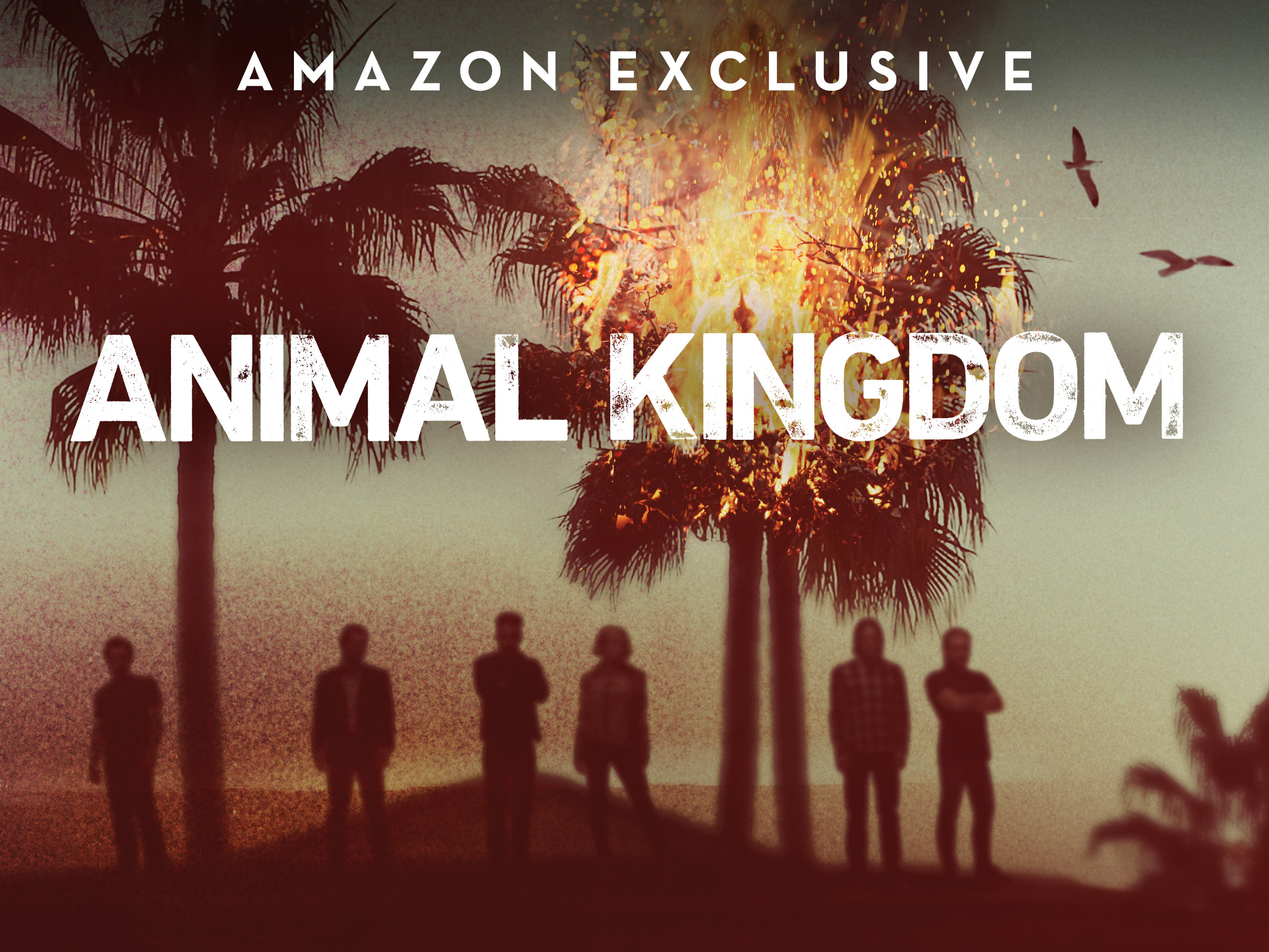 """Animal Kingdom"" Season 1 To 5 Available On Netflix? | Where to Watch"