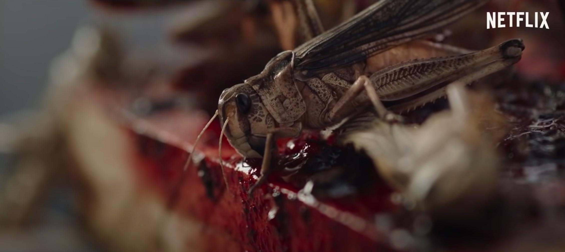 The Swarm : La Nuée French Horror Film | Netflix Release Date