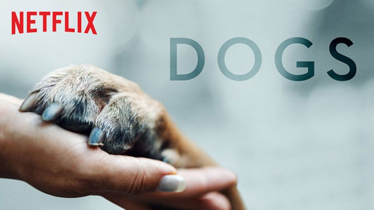 Dogs Season 2 Coming This Week To Netflix - Release Date, Trailer & More