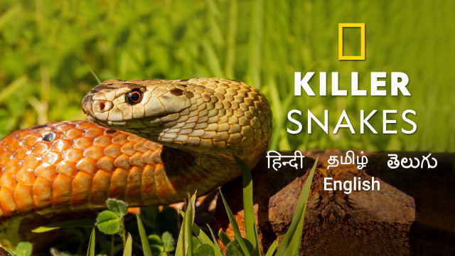 Killer Snakes : National Geographic | Watch Online Free
