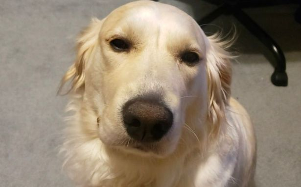 Rachel realised her golden retriever made a sound every time she petted her