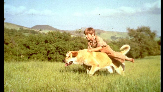 23. The boy has to shoot Old Yeller     • Movie:  Old Yeller (1957)     • Starring:  Dorothy McGuire, Fess Parker, Tommy Kirk, Jeff York