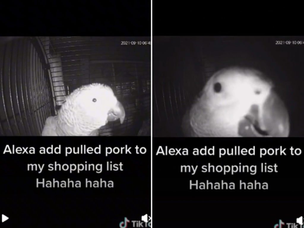 Parrot goes viral on TikTok after asking Amazon Alexa to add pulled pork to owners shopping list